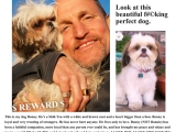 Daily Dish 9-14-12: Pinterest, Primetime Two-Screening, Danish Bus, and Who Stole Charlie Costello's ShihTzu?